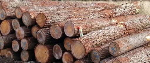 چوب سرخدار,اسقامت چوب,انواع چوب صنعتی,